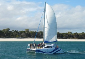 Blue Dolphin - Dolphin Watching and Sunset Cruises