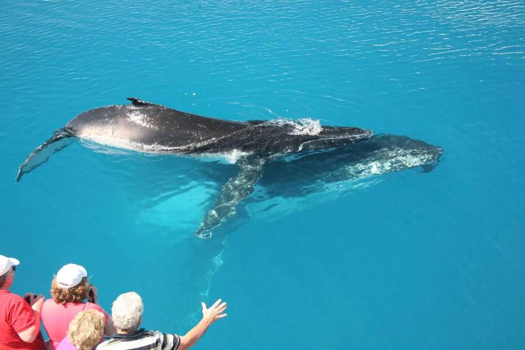 Tasman Ww Photo 3