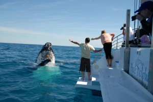 Hervey Bay - Whale Watching Capital of the World