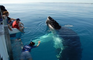 Whale Watching Hervey Bay Style
