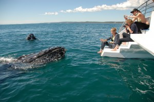 Hervey Bay - The BEST Whale Watching Experience